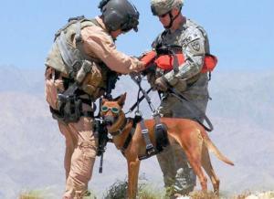 بالصور.. 7 حيوانات استعانت بها الجيوش في أغراض عسكرية