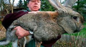 تعرف على أكبر و أضخم 5 حيوانات بالعالم, حيوانات لن تصدق أنها موجودة