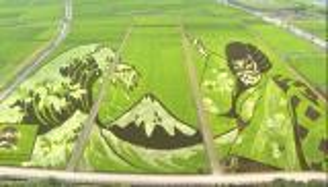 بالفيديو  ..  الاستثناء دائما ياباني ..  تحويل حقول الأرز إلى لوحات فنية خضراء