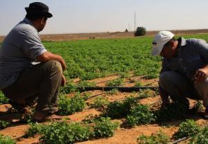 20 مليون دينار قروض دون فوائد للمزارعين