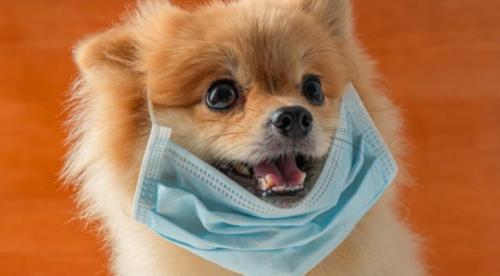 تفاصيل جديدة حول إصابة كلب بكورونا في اربد