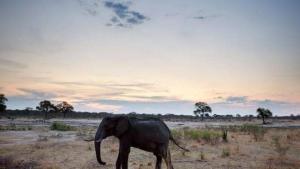 زيمبابوي تنفذ أكبر عملية نقل حيوانات في تاريخها