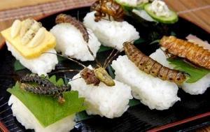 الحشرات غذاء للبشر في أوروبا قريباً