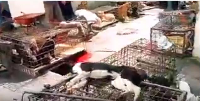 بالفيديو  .. مشاهد صادمه من سوق هونان الصيني الذي صدر فيروس كورونا للعالم