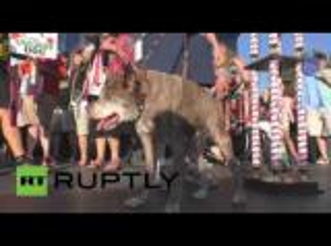 """""""Quasi Modo"""" أبشع كلب في العالم (فيديو)"""