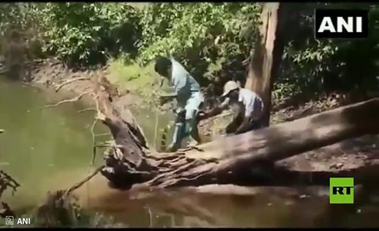بالفيديو : هندي ينجو بأعجوبة من لدغة كوبرا
