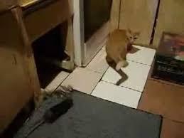 بالفيديو: احضروا قط ليخلصهم من فأر وهذا ما حدث