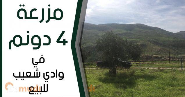 مزرعة 4 دونم في وادي شعيب قرب مقام سيدنا شعيب للبيع