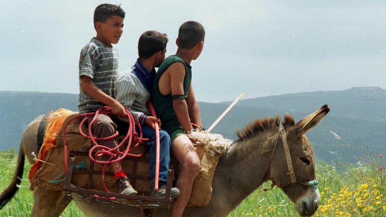الازمات تعيد اللبنانيين لاستخدام الحمير في التنقل  .. فيديو