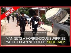 بالفيديو.. عثر على أفعى ضخمة تحت خزانة الأحذية