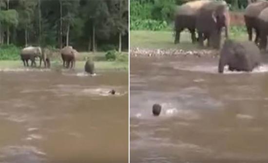 شاهد : شخص يُمثّل أنه يغرق في نهر بتايلند ..  ردة فعل مفاجئة من أحد الفيلة