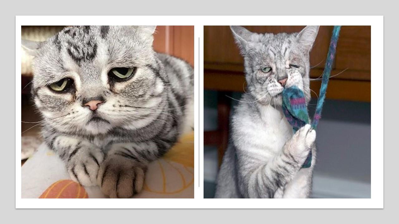 """في سابقة هي الأولى من نوعها في الأردن  ..  سيدة تلجأ للقضاء بسبب معاناة """"قطتيها"""" نفسياً"""