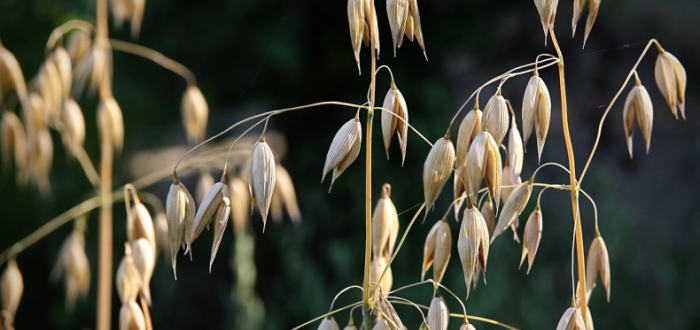 تفسير حلم البذور في المنام