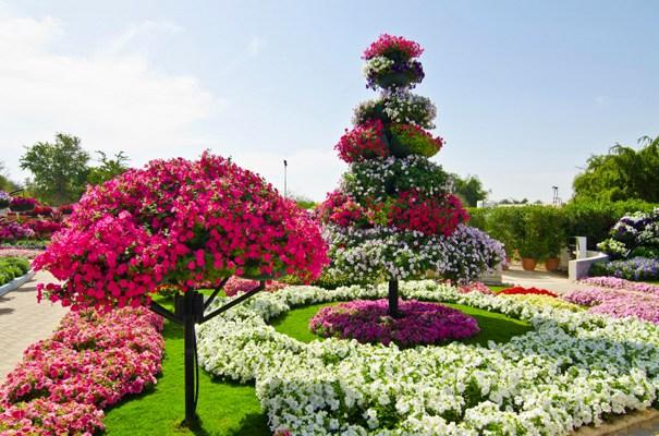 بالصور ..  حديقة العين براديس ..  جنة من الزهور