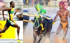 """عامل بناء هندي يحطم رقم العداء العالمي بولت في """"سباق الجواميس"""" (فيديو)"""