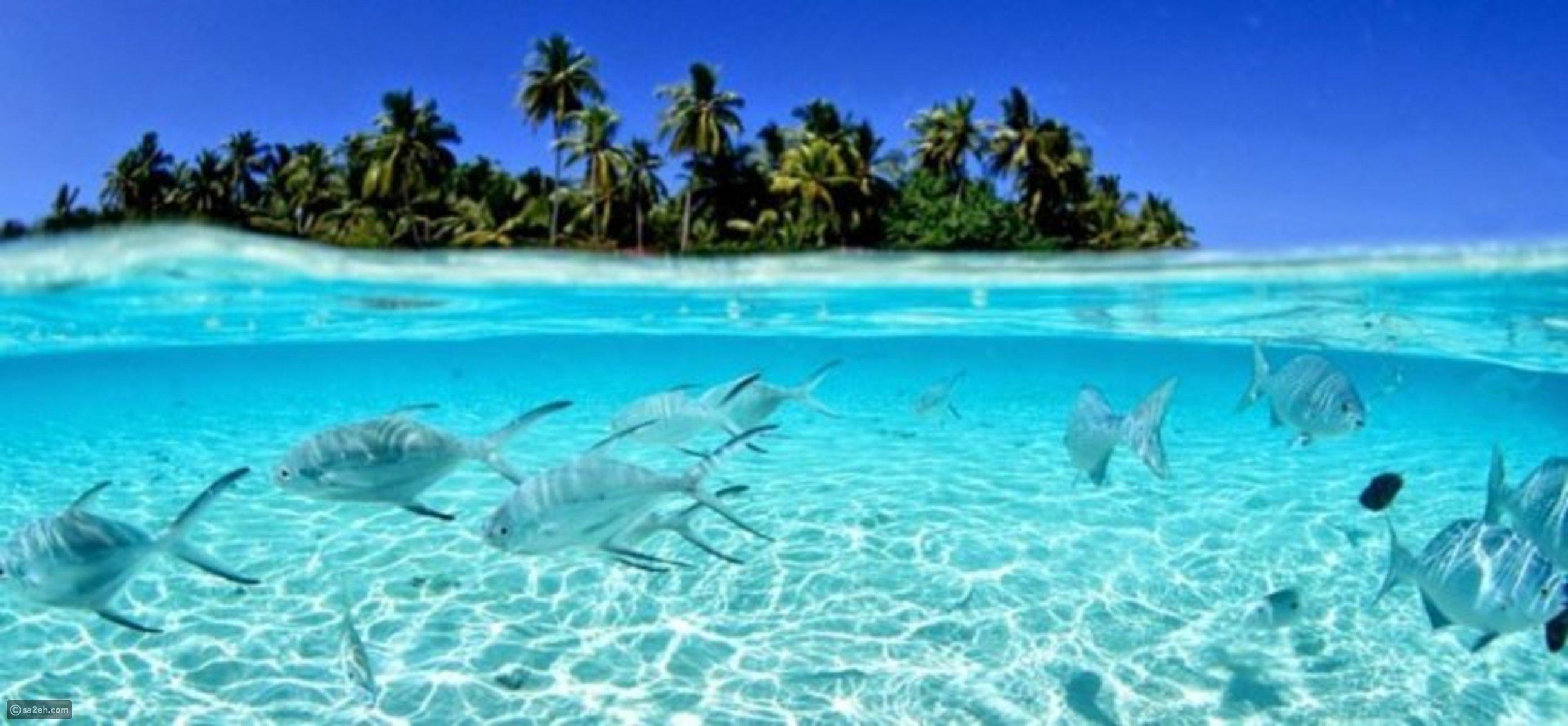 اكتشف معنا أجمل شواطىء هاواي  ..  صور