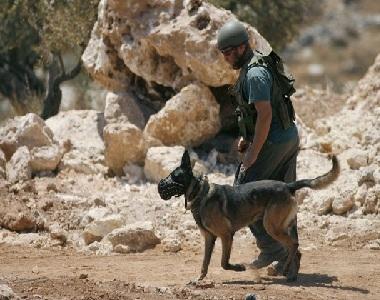 كلاب اسرائيلية تهاجم كل من يقول الله أكبر  ..  ! (فيديو)