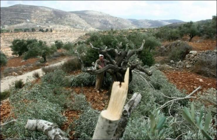 نابلس: مستوطنون يسرقون اشتالا ومعدات زراعية