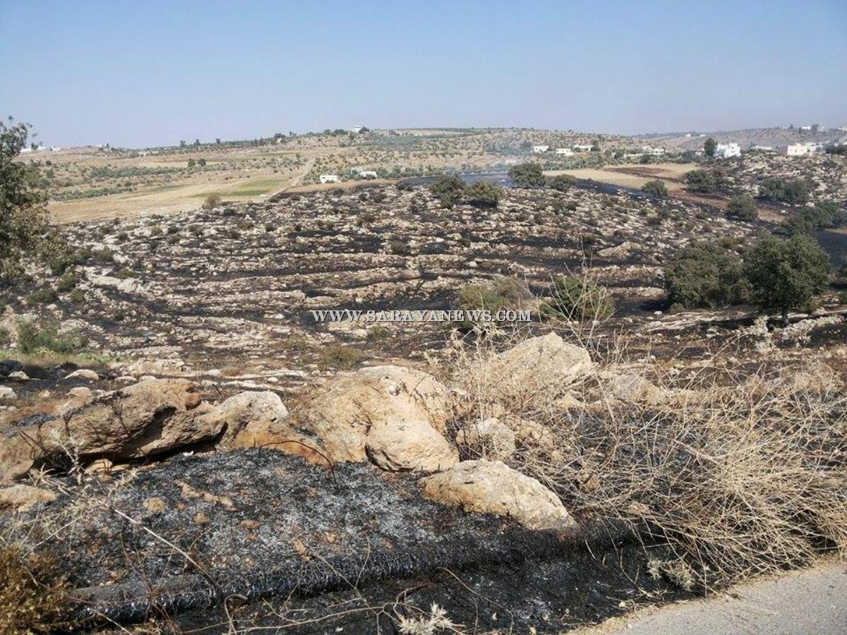 اربد: حريق يلتهم 500دونم زراعي في لواء الكورة .. صورة