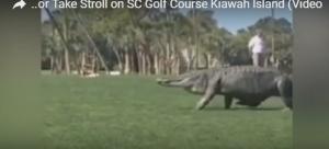 تمساح ضخم يقتحم مباراة غولف ويصيب الجميع بالهلع .. فيديو