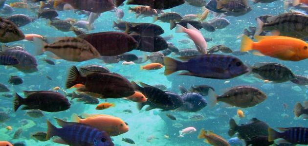 تفسير السمك في المنام لابن سيرين