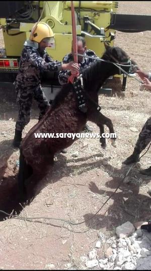 بالصور ..  انقاذ حصان علق في احد الآبار في المفرق
