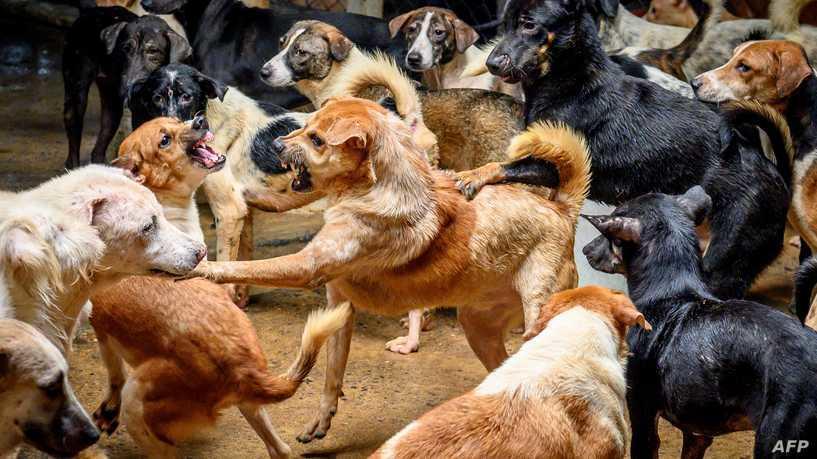 كلاب شرسة تنهي حياة سيدة في البرازيل