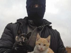 القطط والحروب.. الحيوان الأليف يلهو فى ساحات الدمار (صور)