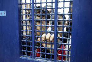 الأسير حمور يواصل إضرابه لليوم الـ14