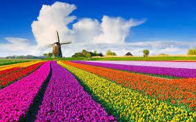 بالفيديو  ..  حقائق قد لاتعرفها حول هولندا