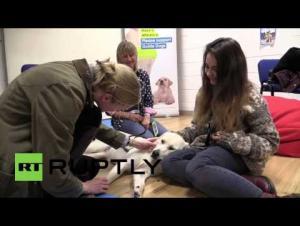 بريطانيا:مركز لمداعبة الكلاب لتخفيف التوتر قبل  الامتحان