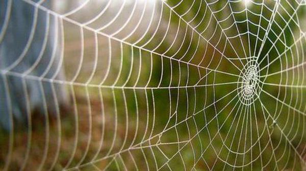 حرير العنكبوت يقترب من رصد دقات القلب