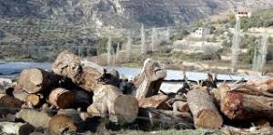 وزارة الزراعة تنشر 9 دوريات خارجية لضبط تهريب الحطب من عجلون وجرش