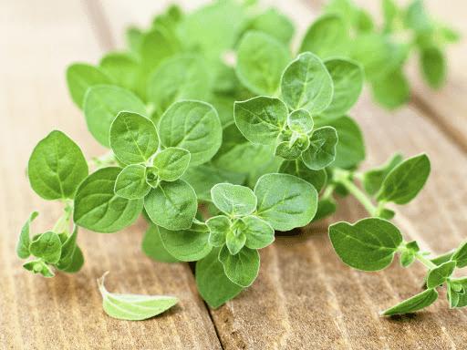 تعرّفوا على فوائد الزعتر الأخضر