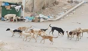 انتشار الكلاب الضالة بين الاحياء السكنية شمال الكرك