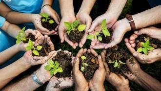 دراسة: 40 % من نباتات العالم مهددة بالانقراض