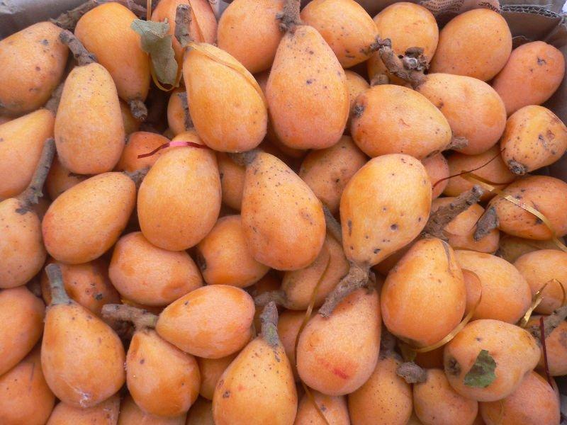 """الزراعة : الاسكدنيا المتوفرة في السوق """"منتج محلي"""" وليست مستوردة"""
