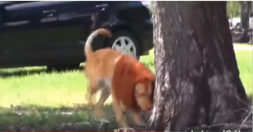 يحول كلبه الى اسد