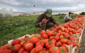 انخفاض أسعار المنتجين الزراعيين بنسبة 16%