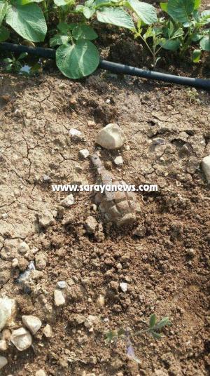 الأغوار الشمالية: العثور على قنبلة يدوية في أرض زراعية بمنطقة وادي الريان .. صورة