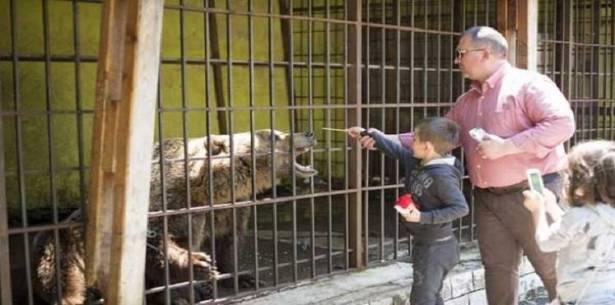 دب يلتهم يد طفل فلسطيني في حديقة الحيوانات!