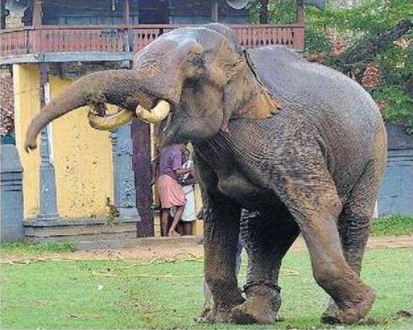ما قصة الرجل الإفريقي الذي مات تحت أقدام الفيل؟