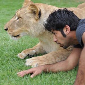 بالفيديو  ..  لن تصدق  ..  شاب إماراتي يعيش وسط الأسود والنمور وحيوانات مفترسة أخرى
