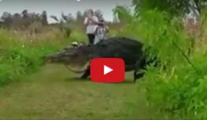بالفيديو..  هذا هو أضخم تمساح على وجه الأرض يمشي.. ببطء أمام الجميع!