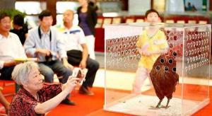 بالصور ... تعرف على ملكة جمال الدجاج  للعام 2014