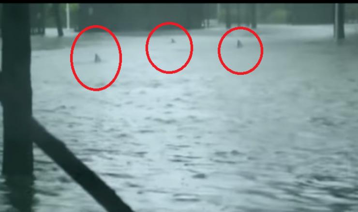 بالفيديو  :أسماك قرش تظهر في شوارع ميامي بفعل الاعصار!