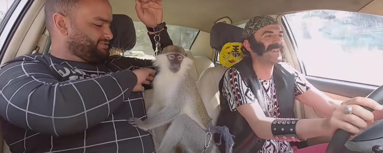 """بالفيديو .. كيف تتصرف لو وجدت في """"التاكسي"""" قرداً؟؟"""