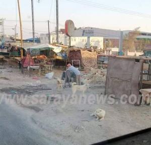 """أهالي """"الظليل """" يشكون معاناتهم اثر انتشار الكلاب الضالة في المنطقة"""