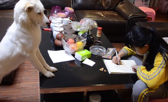 بالفيديو  .. صيني يدرب كلبه على مراقبة ابنته للتأكد من أنها تؤدي واجبها المدرسي