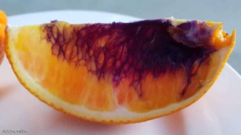 """البرتقال يتحول """"أرجوانيا"""" في ساعات ..  والعلماء في حيرة"""
